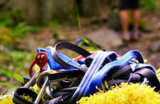 Rock Climbing Gear:  Using Slings, Webbing, and Cord